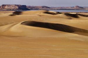 desert-oasis1