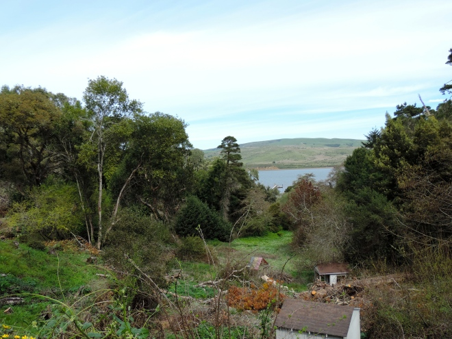 Tomales Bay from St Columba Church and Retreat Center in Inverness, CA