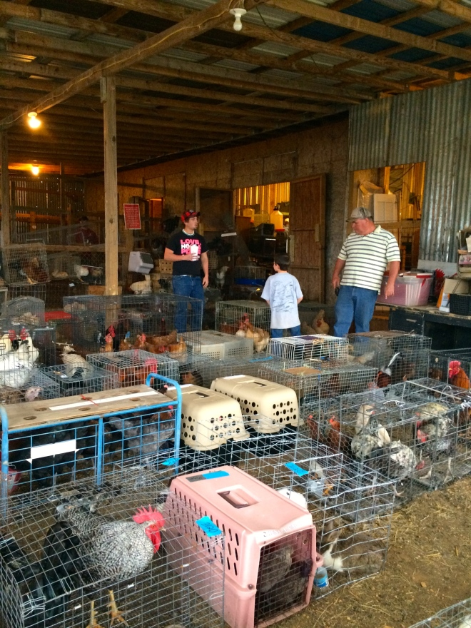 Chickens and other small live stock at auction