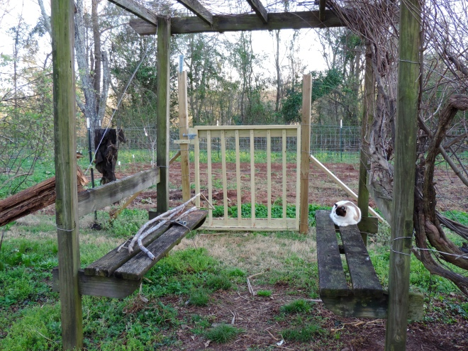 The gate needing to be painted. All advice considered as long as we're talking alive...And yes--that's Dot on one bench and sugar cane on the other.  The Mallowman too is in this spring adventure...